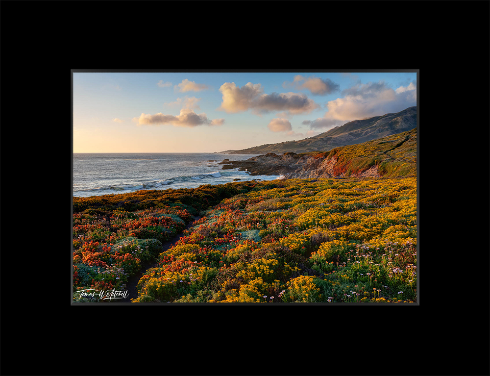 Limited Edition Museum Matted Print - Ready to Frame print preview