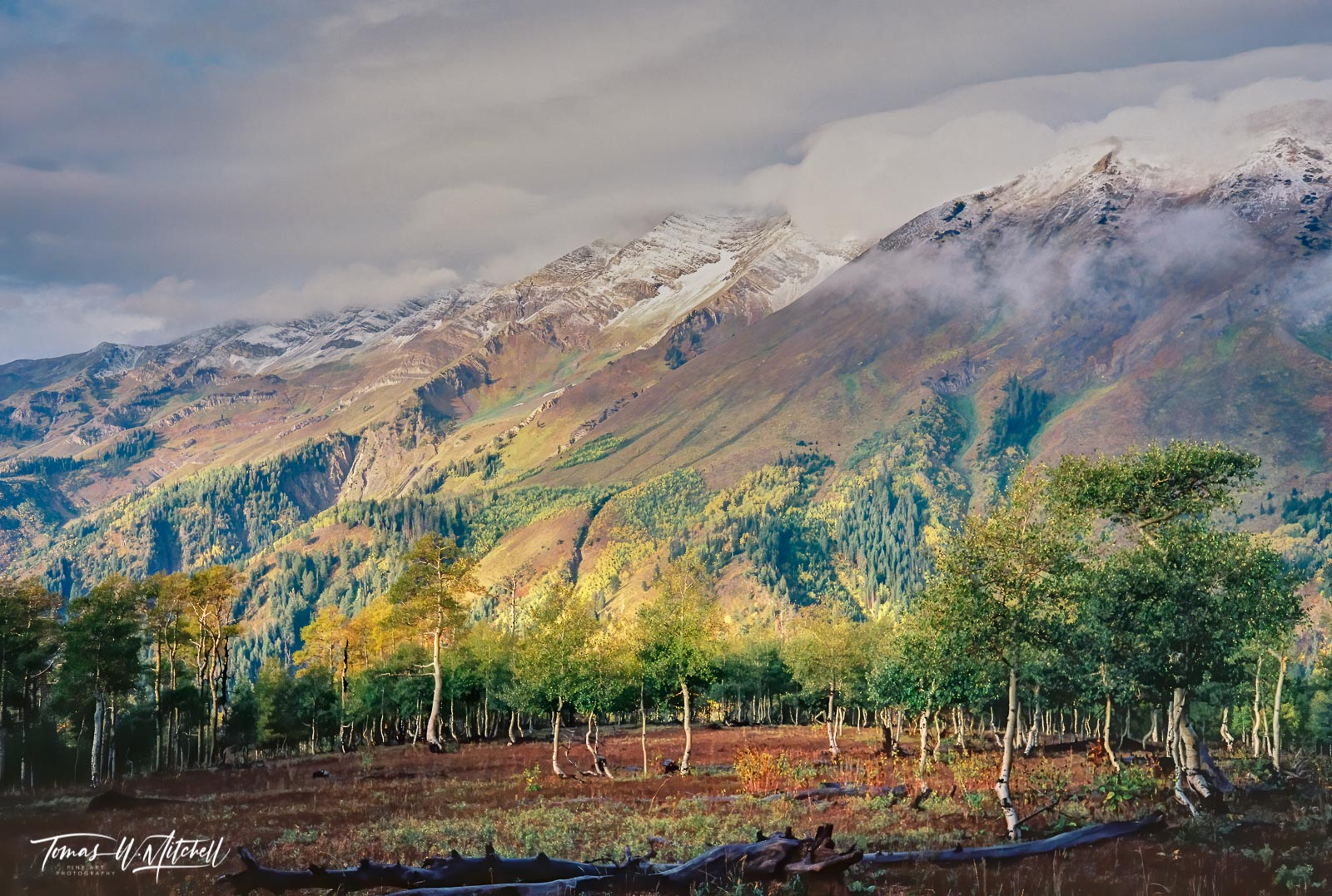 limited edition, fine art, prints, photograph, film, september, pentax, twisted, trees, aspens, snow, soft light, yellow, stormy, clouds, mountain, fall, photo