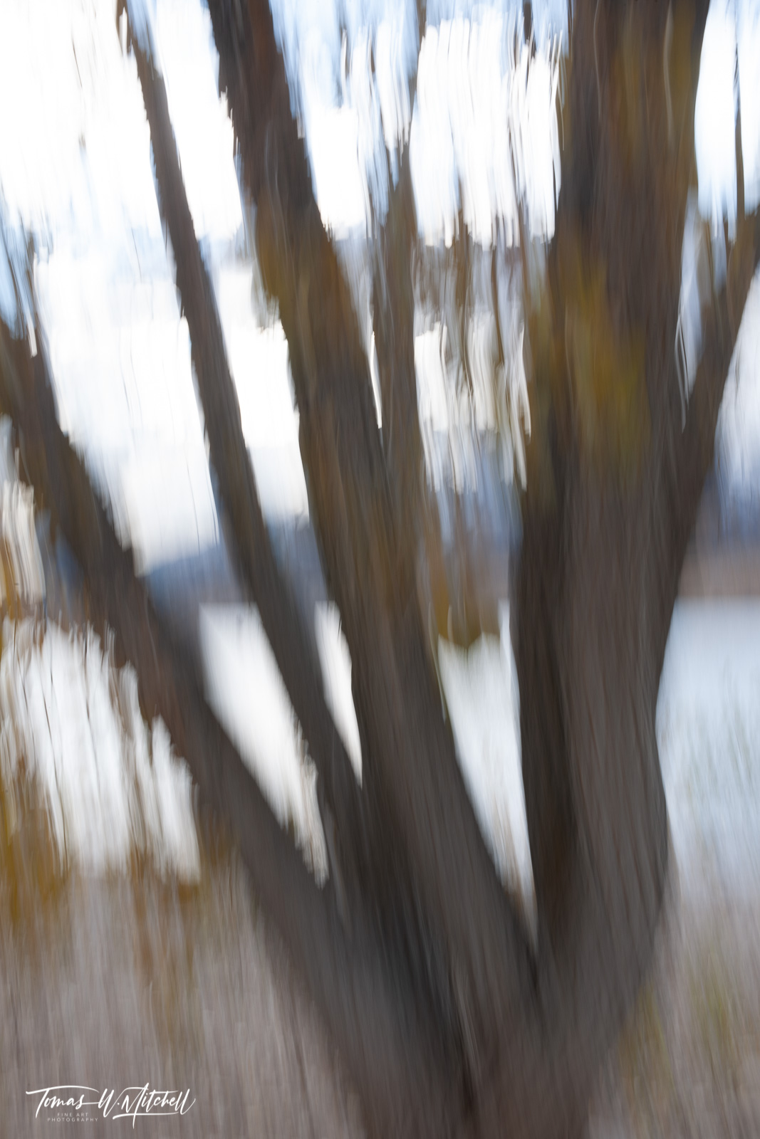 limted edition, fine art, prints, photograph, deer creek reservoir, utah, painted, yellow leaves, branches, shoreline, water, mountains, abstract, trees,, photo
