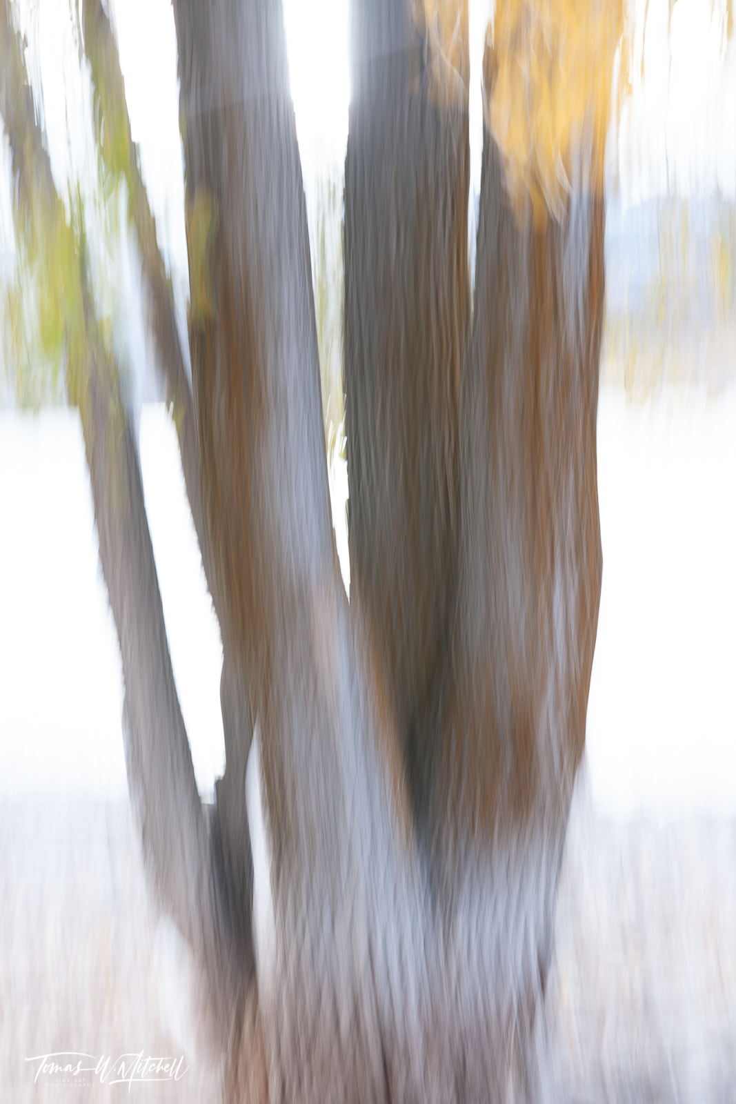 limited edition, fine art, prints, deer creek reservoir, utah, trees, abstract, photograph, leaves, water, autumn, texture, mountain, photo