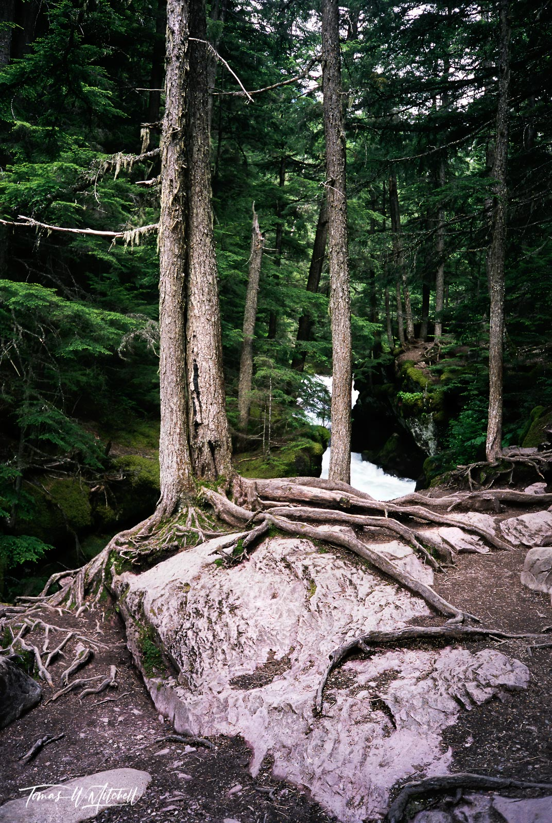 limited edition, fine art, prints, photograph, film, avalanche lake, glacier national park, montana,  j.r.r tolkien, ent, forest, entwood, The Lord of the Rings, roots, rocks, forest, trees, moss, photo