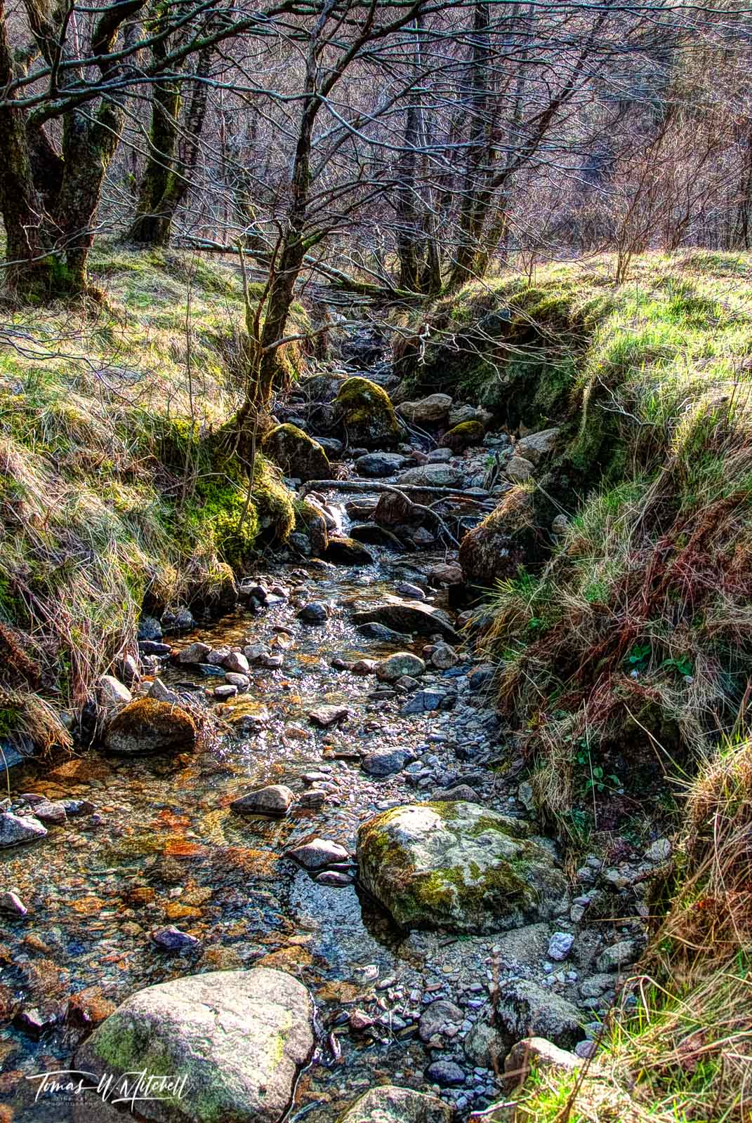 limited edition, museum grade, fine art, prints, glen coe, scotland, fairy, stream, sunlight, grass, branches, trees, water, nature, photo