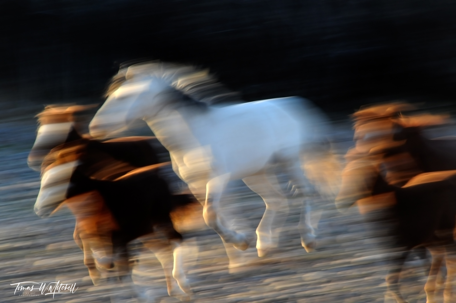 limited edition, fine art, prints, photograph, salt river, arizona, wild horses, mustangs, abstract, stallion, motion, running, photo