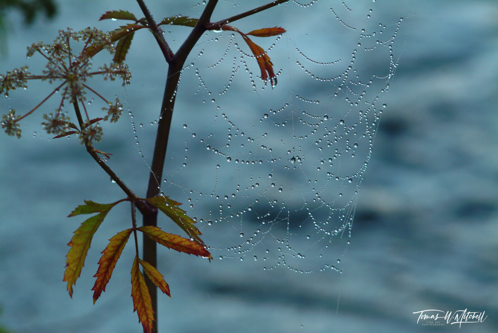 spider web covered in droplets of water in Yellowstone