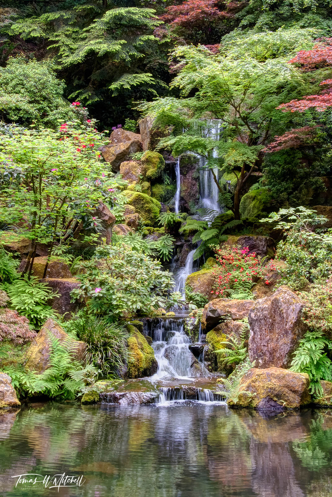 Limited Edition of 50 Museum Grade, Fine Art Prints. The Japanese Garden in Portland, Oregon is one of my favorite places to...