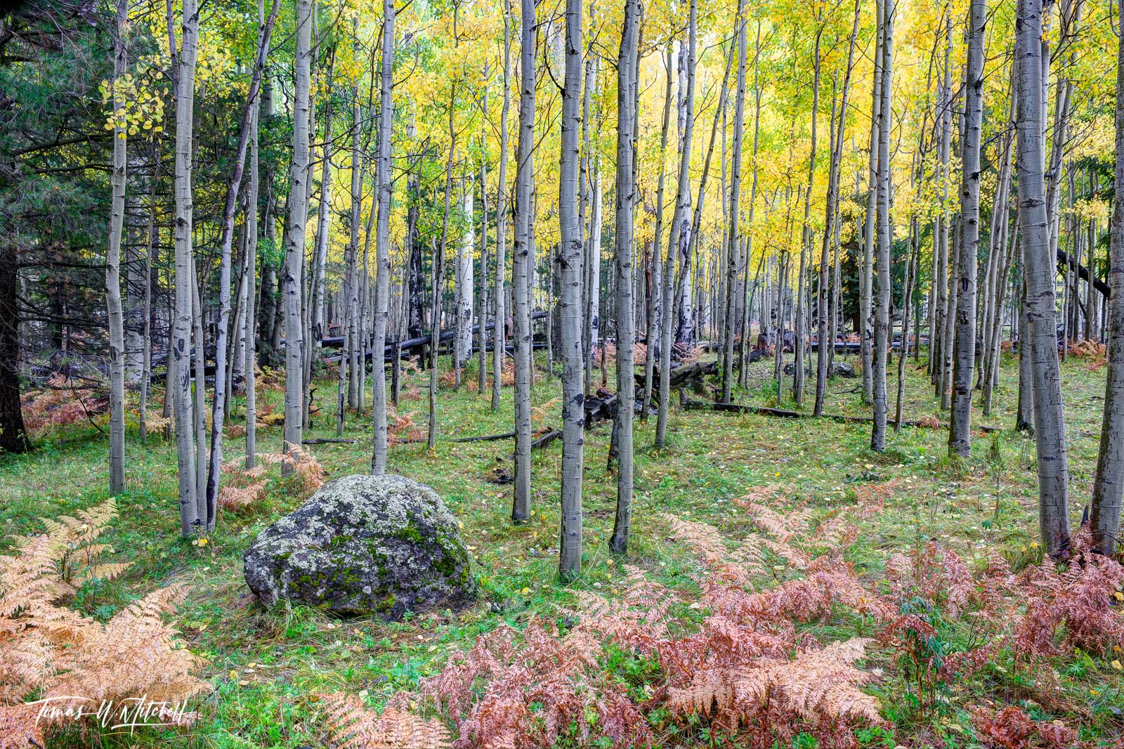 Limited Edition of 50 Museum Grade, Fine Art Prints. I was on business in Flagstaff, Arizona September 30 2016 and as usual I...