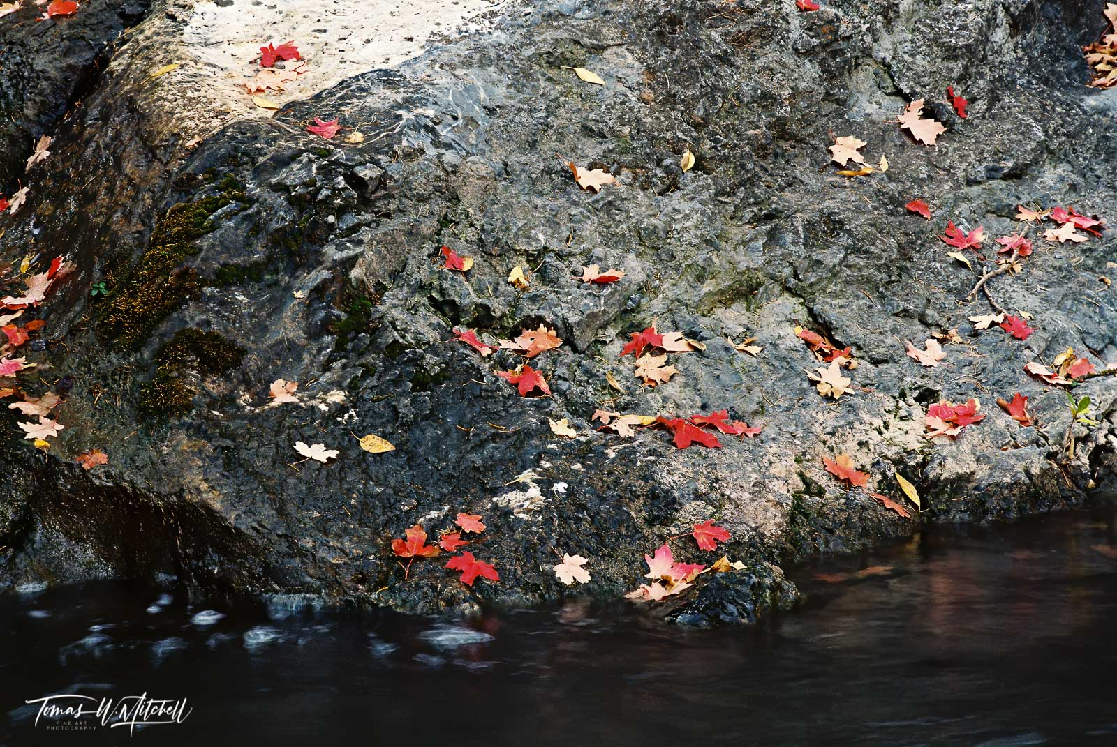 limied edition, fine art, prints, canvas, photograph, film, santaquin canyon, utah, creek, maple trees, colors, falling leaves, dark, rock, water, red, contrast, photo