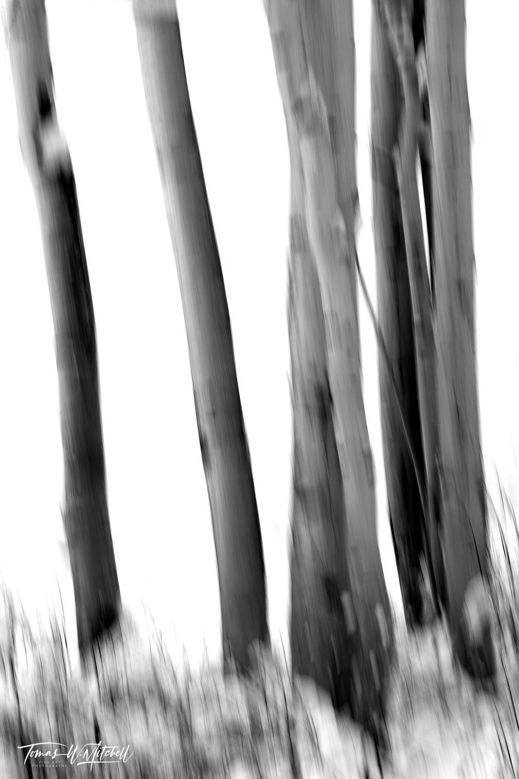 UINTA-WASATCH-CACHE NATIONAL FOREST, UTAH, limited edition, fine art, prints, snowstorm, aspen trees, snow, blur, photograph, black and white, abstract, winter, photo