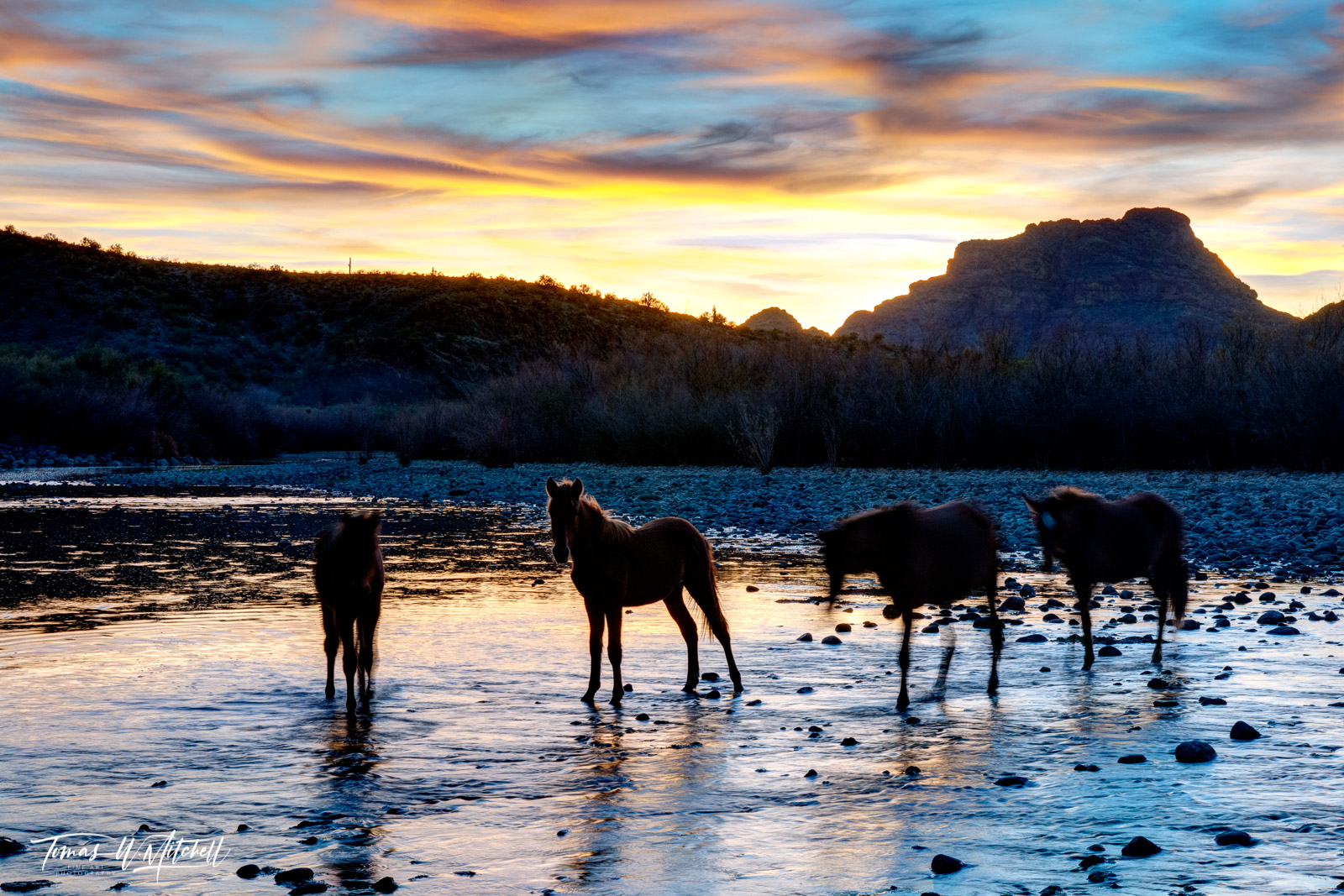 limited edition, fine art, prints, photograph, salt river, arizona, wild horses, mustangs, abstract, ghost horses of the river, sunset, twilight, photo