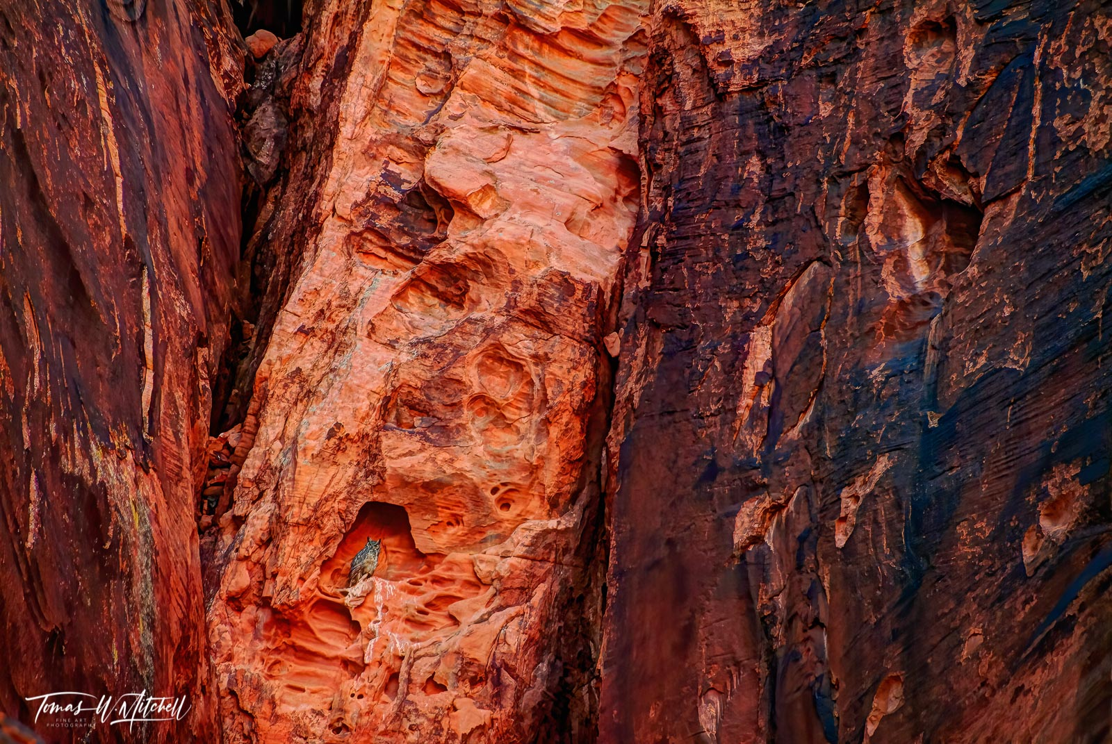 limited edition, fine art, prints, valley of fire, nevada, great horned owl, bird, cliff, abstract, photograph red rock, photo