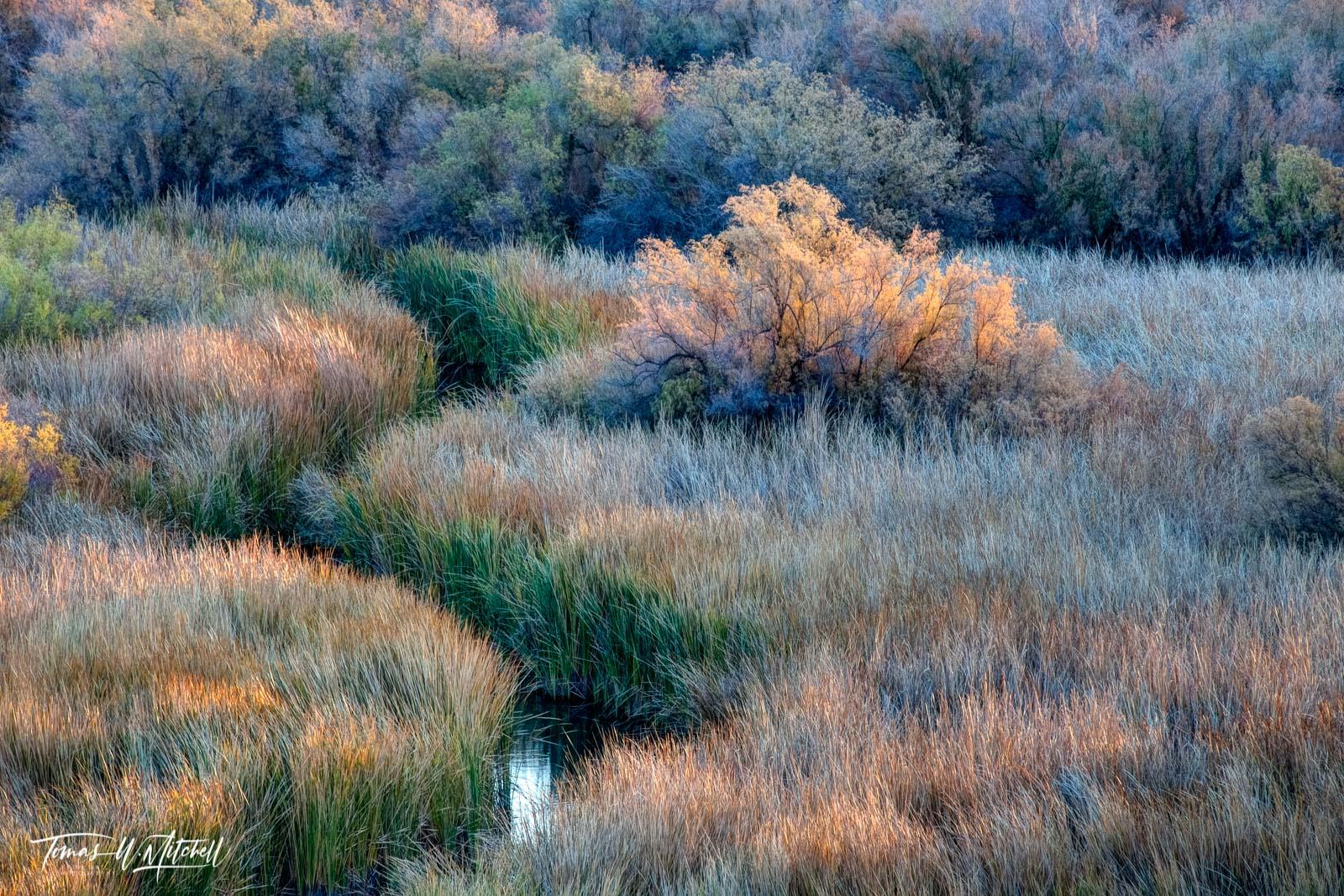 limited edition, fine art, prints, bill williams river, arizona, water, fall, lake havasu, sunrise, grass, bushes, yellow, green, blue, curving, photo
