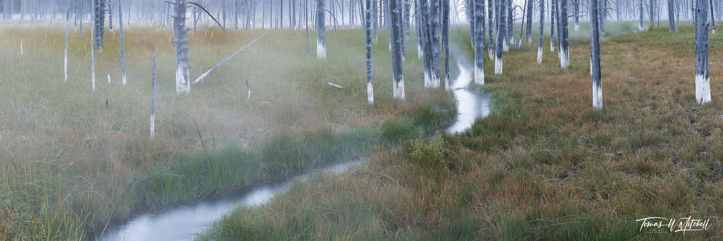 yellowstone national park, limited edition, fine art, prints, fall colors, tree trunks, water, grass, stream, forest, panoramic, artist's proof, , photo